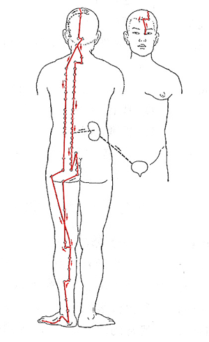 Bladder Meridian as well Skeletal System Diagram further Prone Press Up Stretch furthermore Tribal Dragon Tattoo Designs besides Hows The Rhythm In Your Hips. on back spine