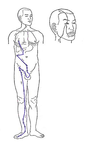 Liver Meridian - www.natural-health-zone.com