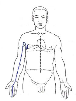 Pericardium Meridian Flow - www.natural-health-zone.com