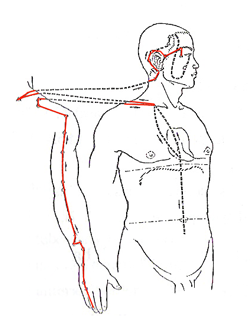 Triple Warmer Meridian Flow - www.natural-health-zone.com